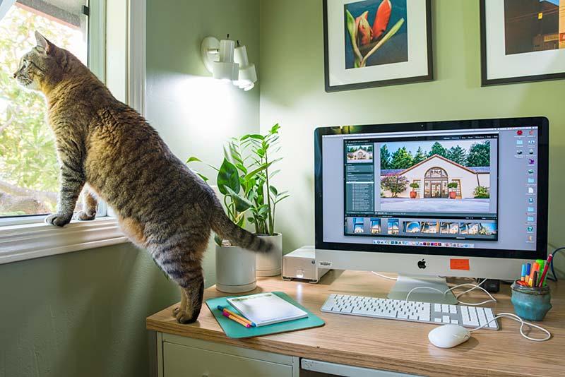 Cat and iMac